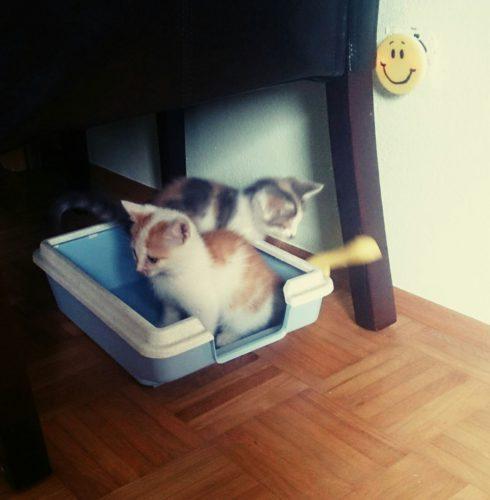verschiedenArt Fellnasen Katzenbabies