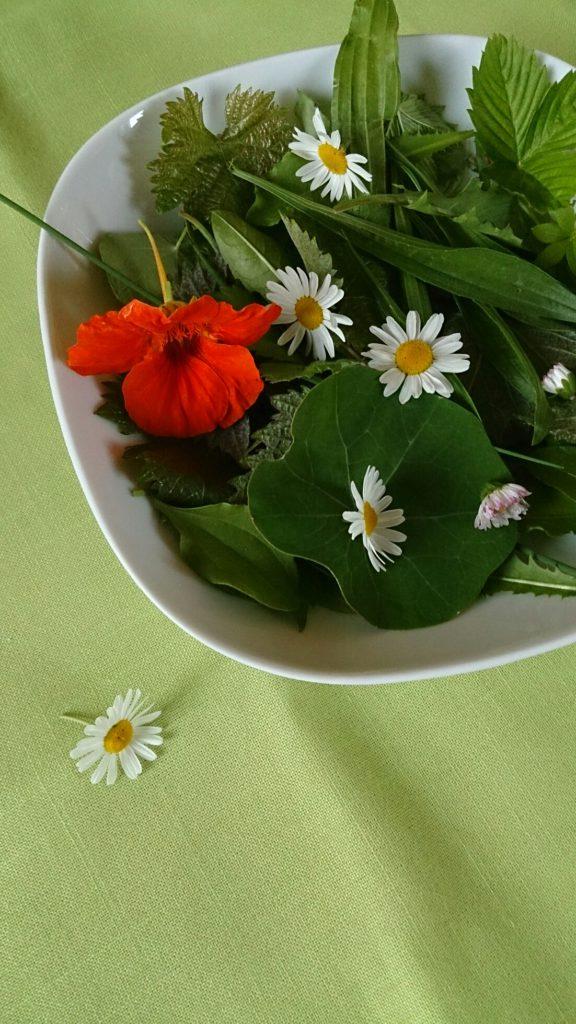 Wildkräutersalat von verschiedenArt