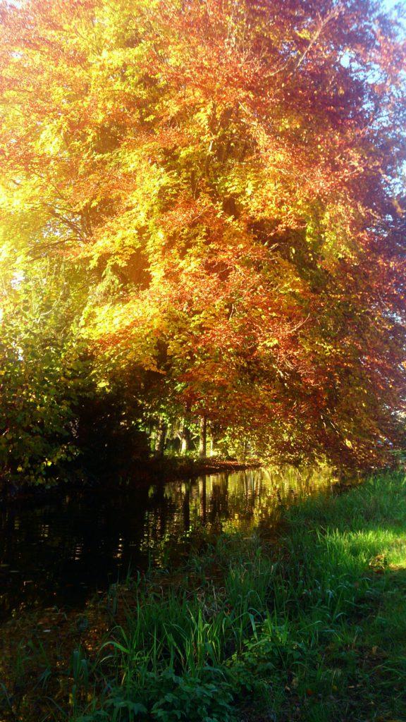 Herbstlich gefärbte leuchtend bunte Zweige biegen sich über die Wasseroberfläche und spiegeln sich im Wasser