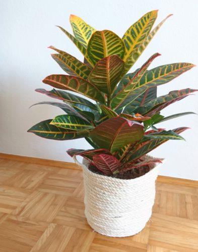 Sisal Korb als Blumenübertopf für meine Zimmerpflanze